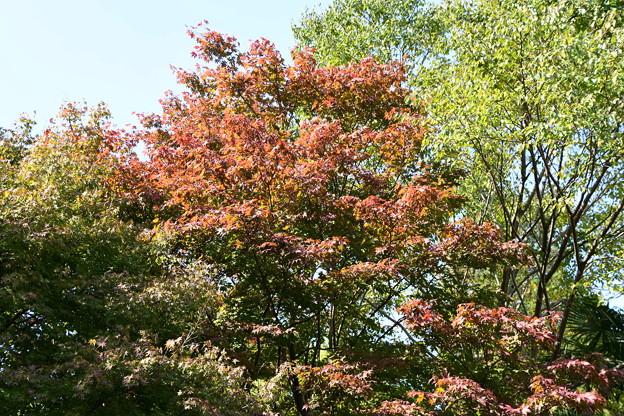 西雲院の紅葉