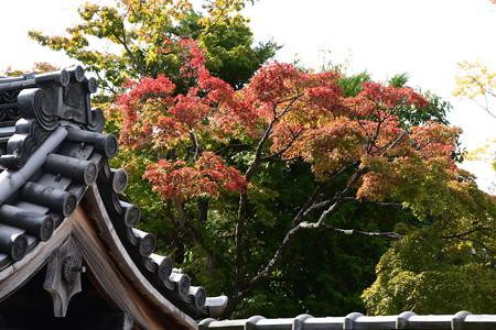 屋根越しの紅葉