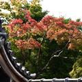 Photos: 屋根越しの紅葉