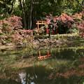 Photos: 池脇の色づき
