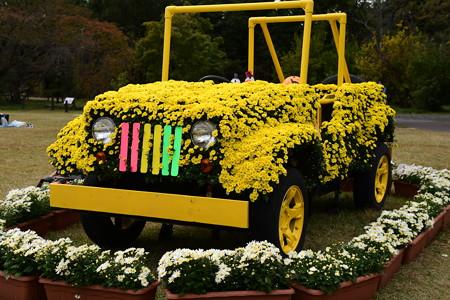 菊の自動車