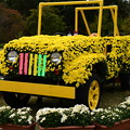 Photos: 菊の自動車