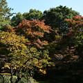 Photos: もみじと柿の葉の色づき