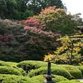 Photos: 庭園の色づき