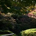 庭園の色づき