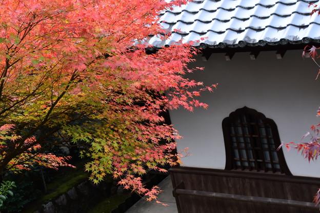裏山から見た紅葉