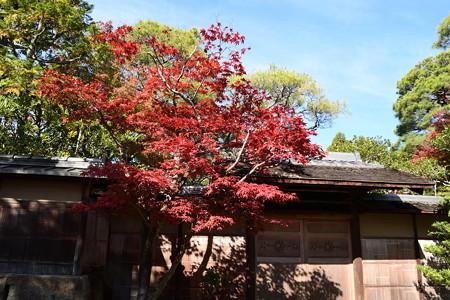 南禅寺付近の紅葉