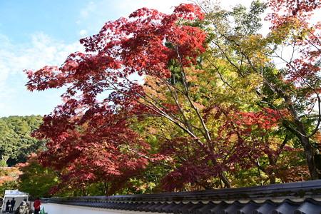 塀越しの紅葉
