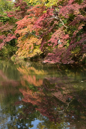 水面に映る紅葉