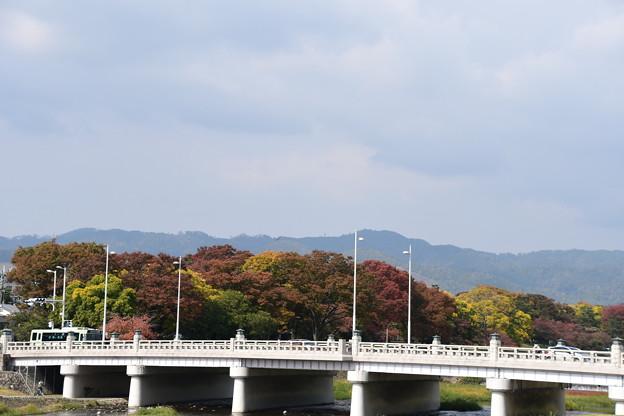 色づく賀茂川