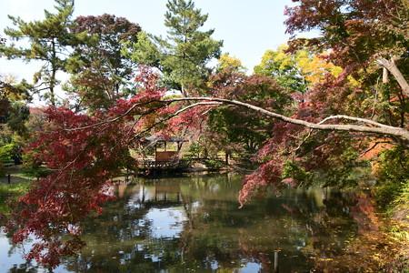 色づき進む植物園
