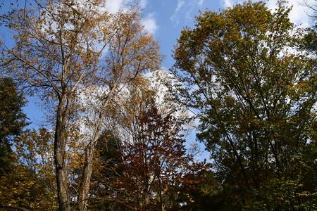 秋色の生態園