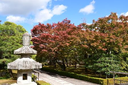 承天閣美術館の紅葉