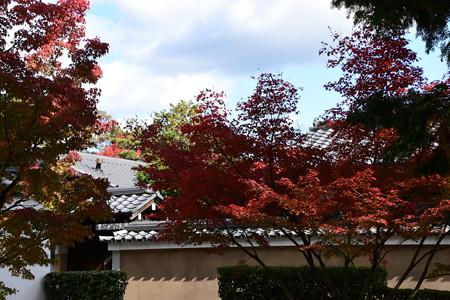 宗旦稲荷脇の紅葉