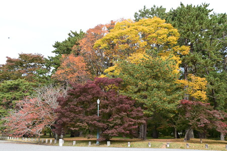 秋色の京都御苑