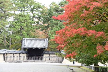 仙洞御所前の紅葉