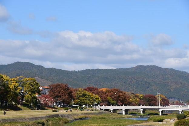 賀茂川の色づき