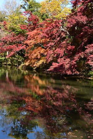 池に映る彩