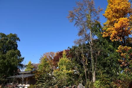 秋色の彩りの丘