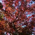 Photos: 禅華院の紅葉