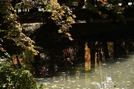 池に映る燦めき