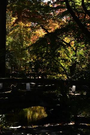 植物園のもみじ景色