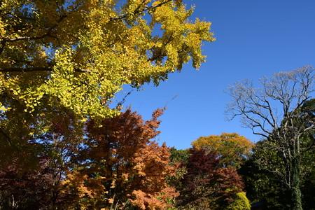 秋彩の植物園