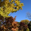 Photos: 秋彩の植物園