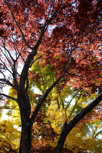 Photos: 赤と黄と