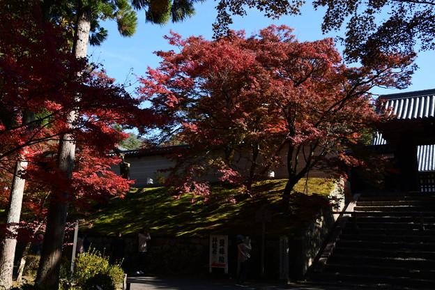 勅使門を彩る紅葉