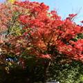 Photos: 武田薬品薬用植物園の色づき