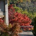 Photos: 関西セミナーハウスの紅葉