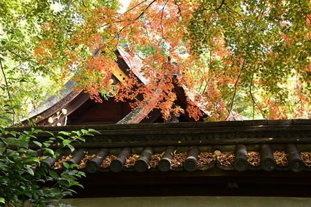 河合神社を彩る