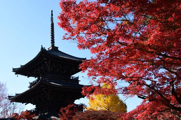 Photos: 塔と紅葉