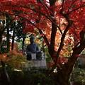 Photos: 栄摂院庭園