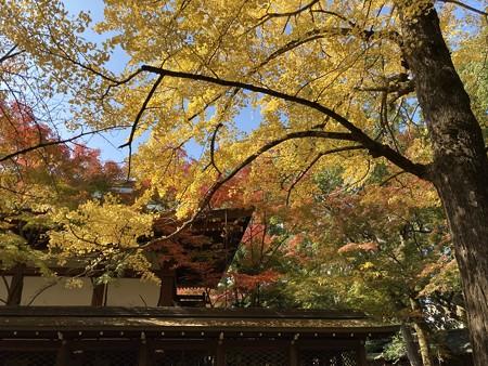 公孫樹と紅葉の上御霊神社