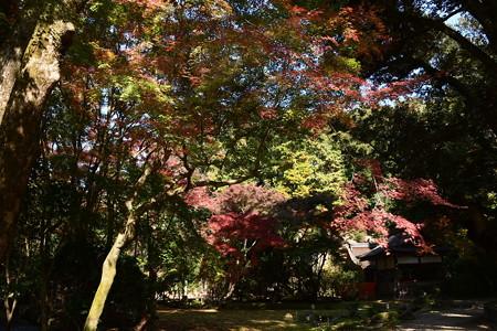 渉渓園の彩り