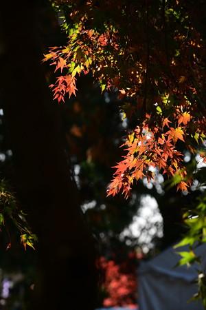 奈良の小川の彩