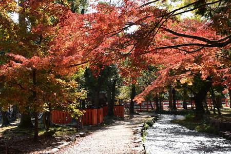 楢の小川の紅葉