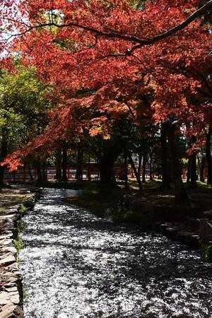 楢の小川の燦めき
