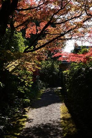 西村家入口の紅葉
