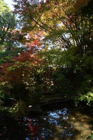 池と色づき