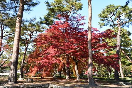 松林の紅葉