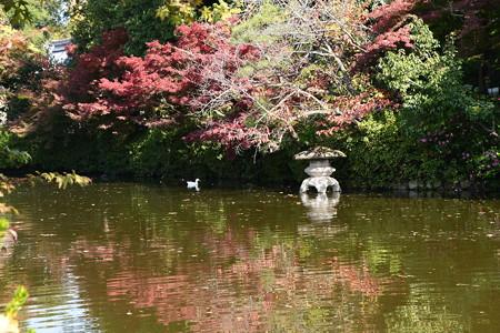 法成就池の紅葉