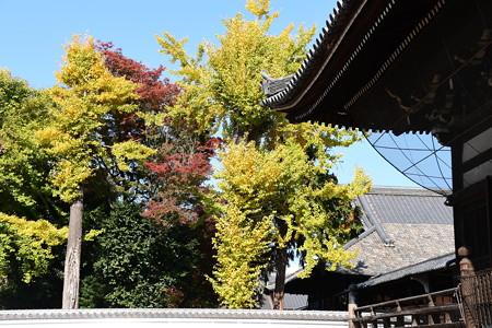 公孫樹の中の紅葉