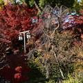 Photos: 北野天満宮の紅葉