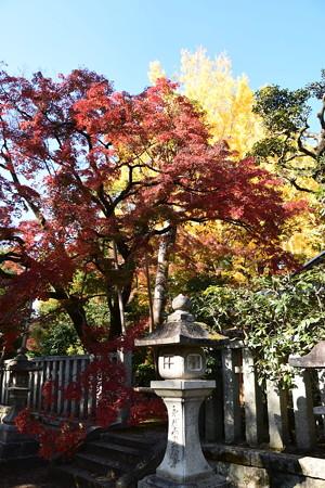 公孫樹と紅葉