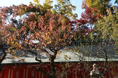 梅の色づき
