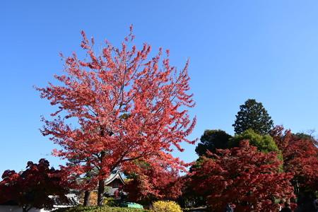 花の木の色づき