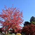 Photos: 花の木の色づき